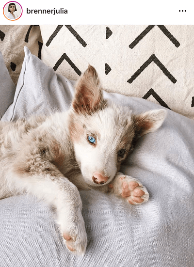 Ideias de conteúdo para o Instagram: o teu animal de estimação